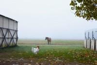 carne-cavalo
